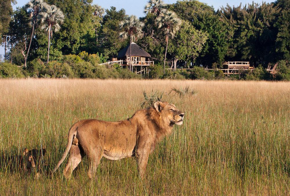 Enactus-safari-botswana-2.jpg