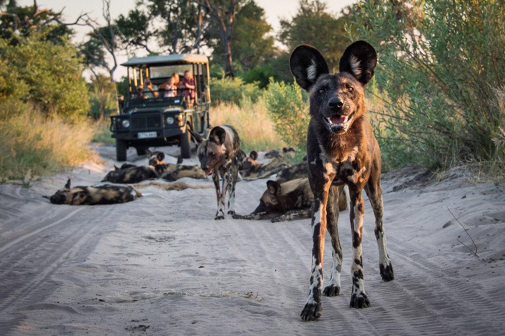 Enactus-safari-botswana-14.jpg
