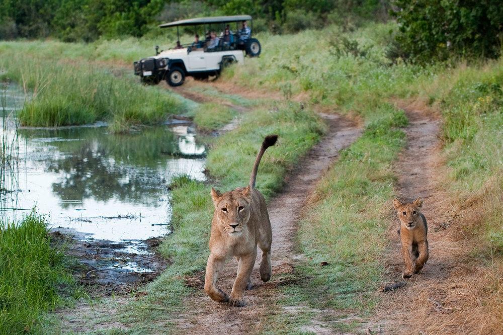 Enactus-safari-botswana-13.jpg
