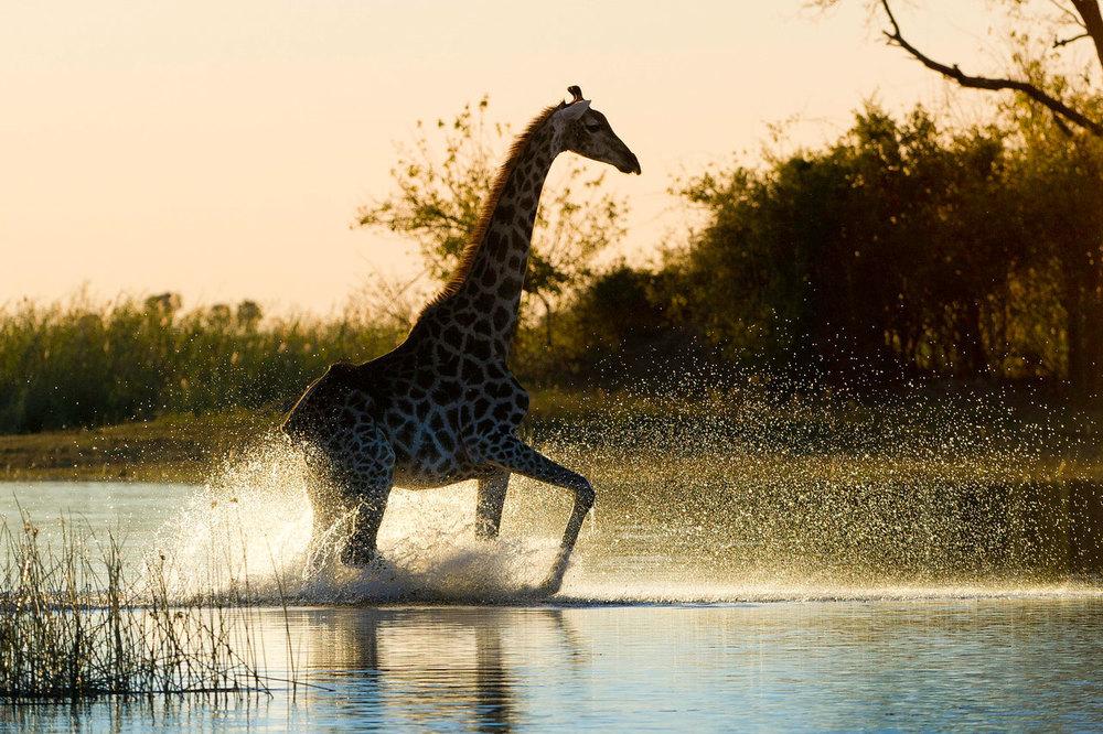 Enactus-safari-botswana-8.jpg
