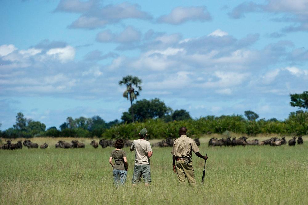 Enactus-safari-botswana-11.jpg