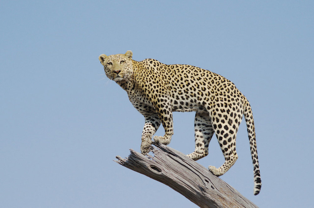 Enactus-safari-botswana.jpg
