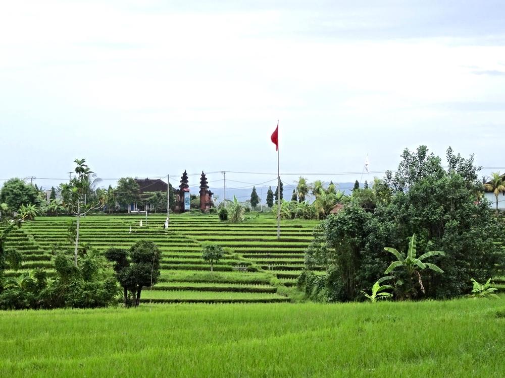 Rice Fields Bali