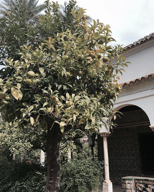 Naranjas en Sevilla