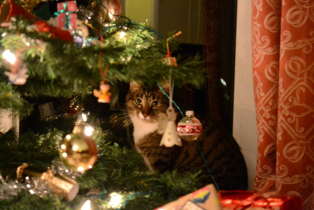 Pesky cat!