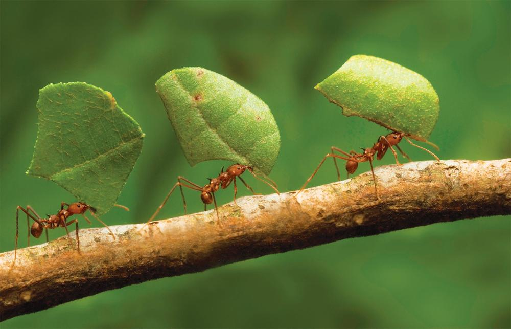 let us protect your family and investment from unwanted pests