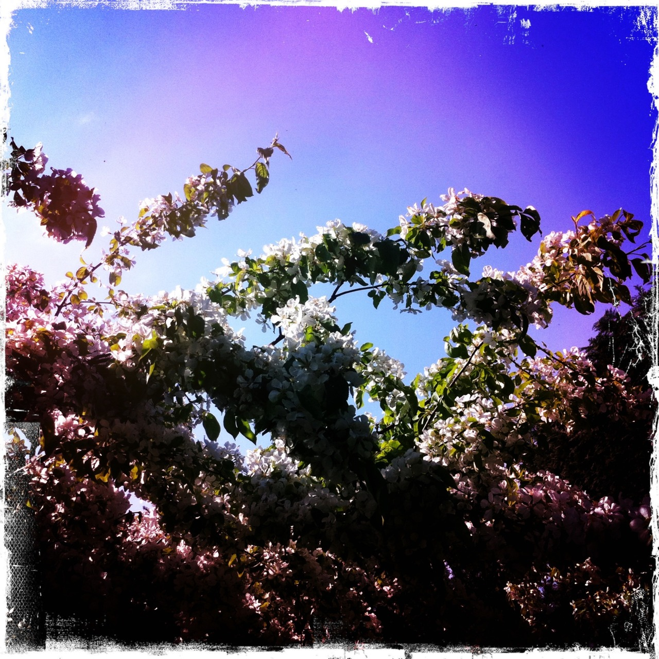 I take WAAY too many hipsta/instagram pictures but sometimes I just can't help it…. You can see some more here.