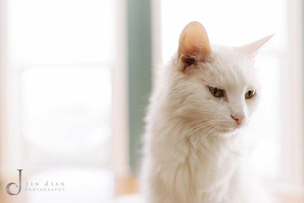 Blanco el gato