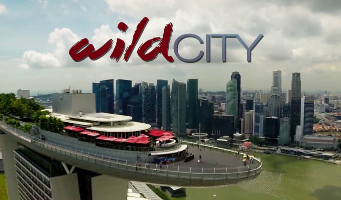 2015 Narrated by Sir David Attenborough, wild city explores the hidden natural wonders that live in one of the most densely populated countries on earth. Episode two was written and directed by Andrew, and focuses on the wildlife that lives amongst the human urban environment.