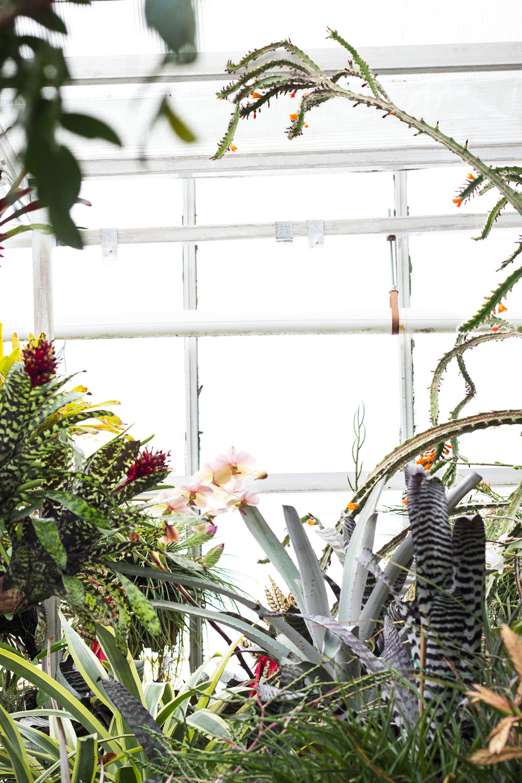 Greenhouse plant window V.jpg