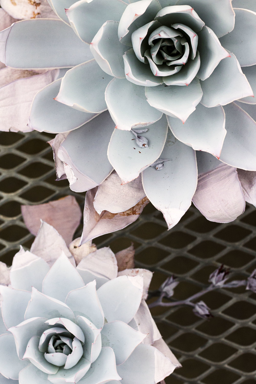 Succulents V.jpg