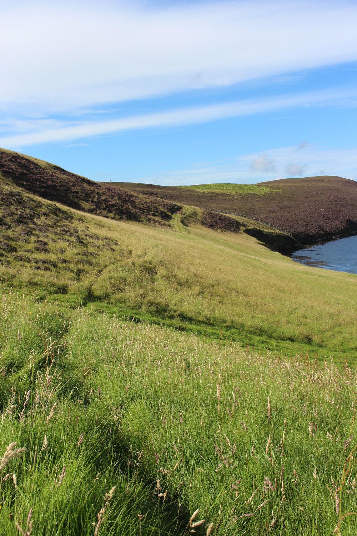 Sheep trails through the long grass.