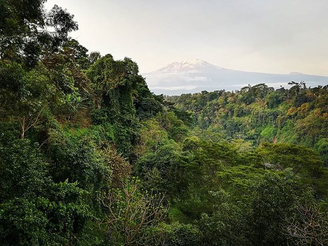 "No picture will ever do this breathtaking mountain justice. But what a day ❤️ . ""You can't go back and change the beginning, but you can start where you are and change the ending"" - c.s.lewis . #kilimanjaro #forest #machame #hike #sunset #sunsetbeer #friends #wow #tanzania #dayoff #publicholiday #nowork #naturelovers #quotestolenfrommysister"