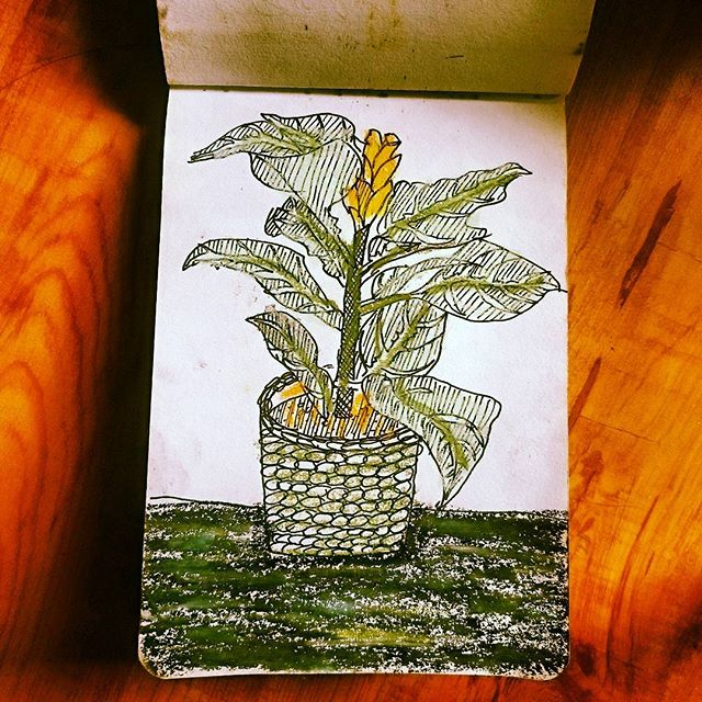 Zebra plant study #sketch