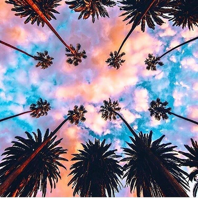 Our favourite kind of view ☁️🌸🌴 #zola #zolalondon #palmtree #palms #canopy #sunset #pastel #clouds #summer #scenery #silhouette #tropical #travel #wanderlust