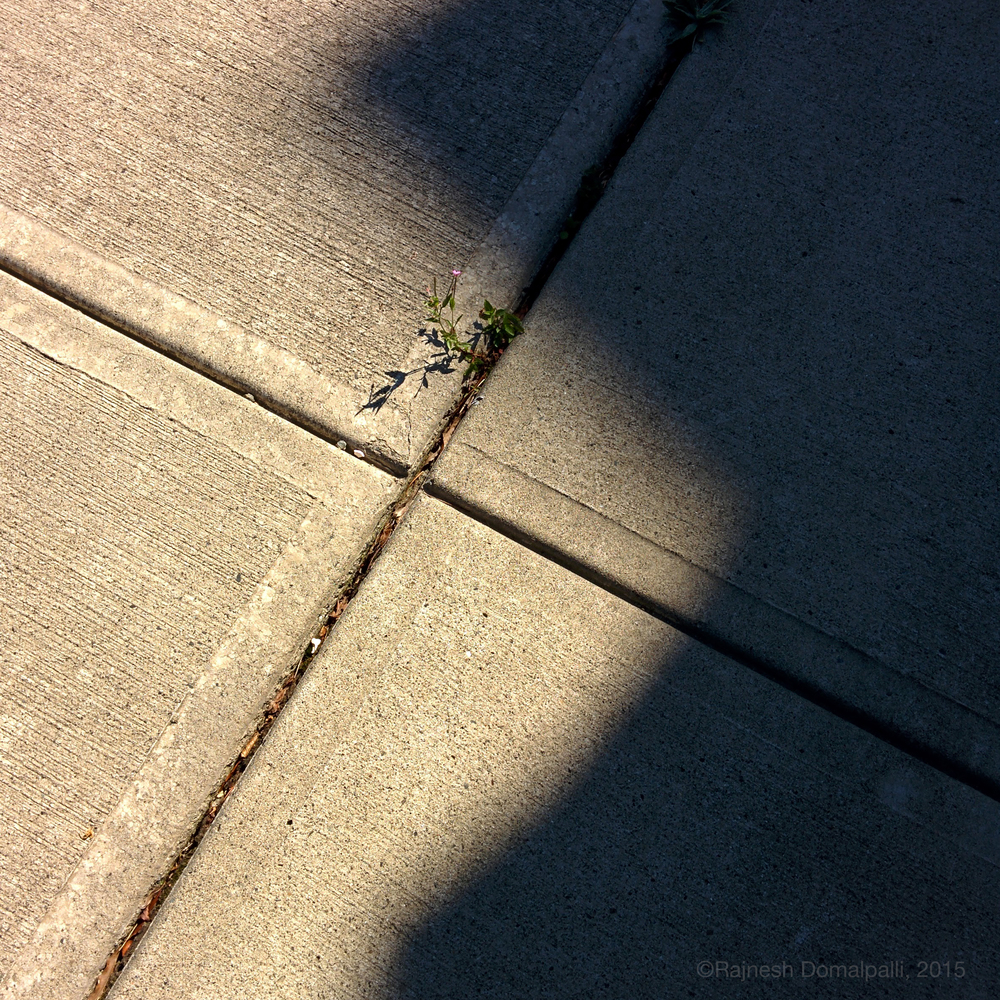 Pavement with Small Plant