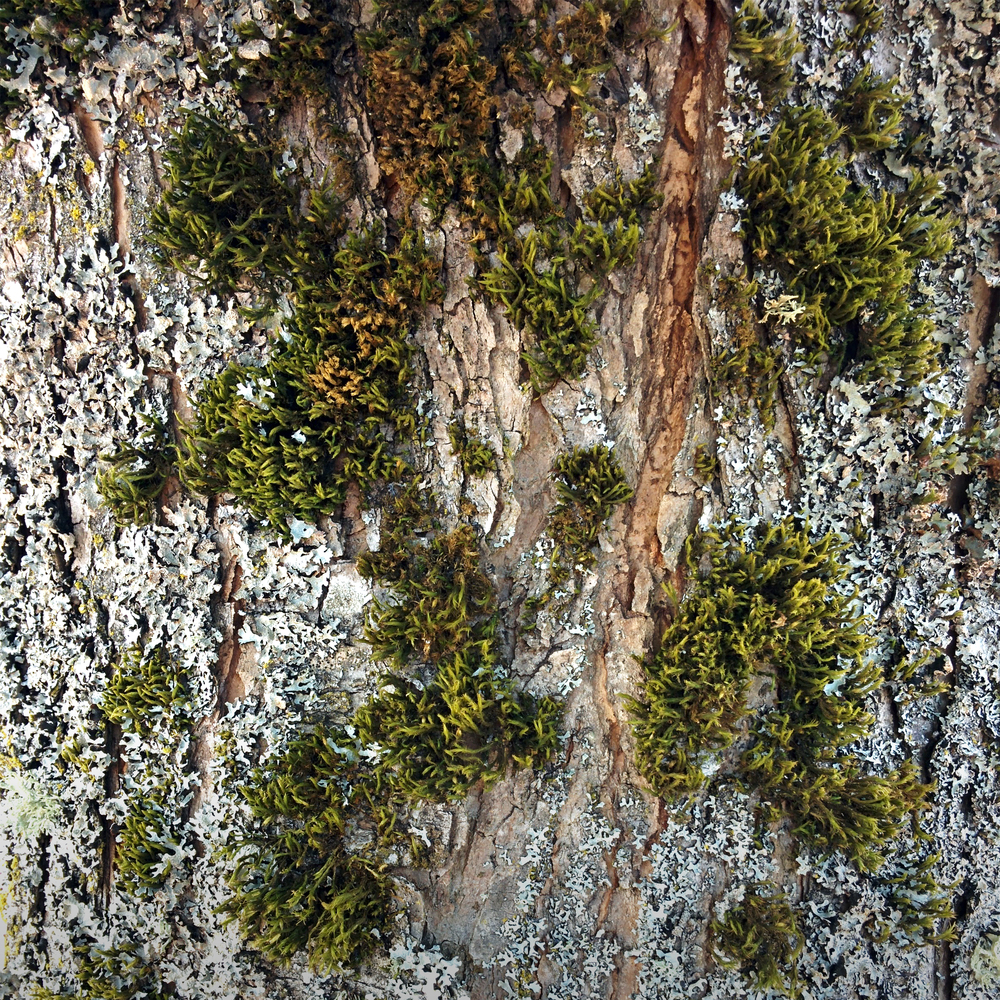 Tree Bark with Moss and Lichen