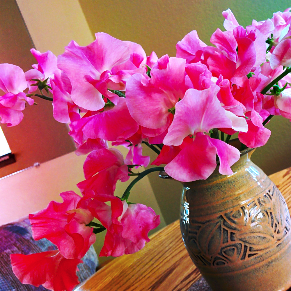 Pink Sweat Peas on Table