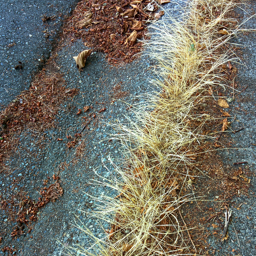 Dry Grass and Leaf Litter on Roadside