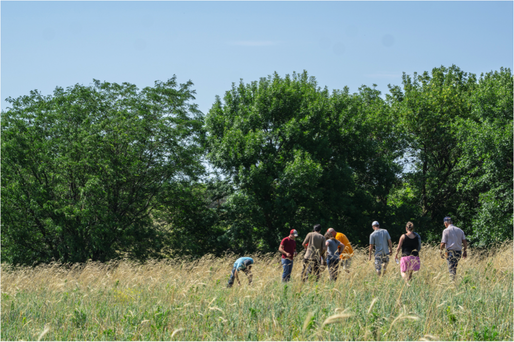 Aspiring young farmers learn about holistic grazing management of livestock in a multi-species cover cropping rotation. This soil has become significantly more productive since it went regenerative. Photo credit: Alexis Bonogofsky