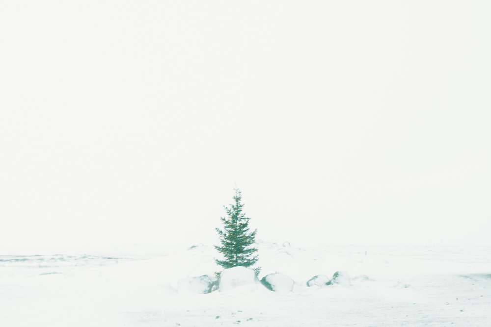 Iceland_-0580.jpg