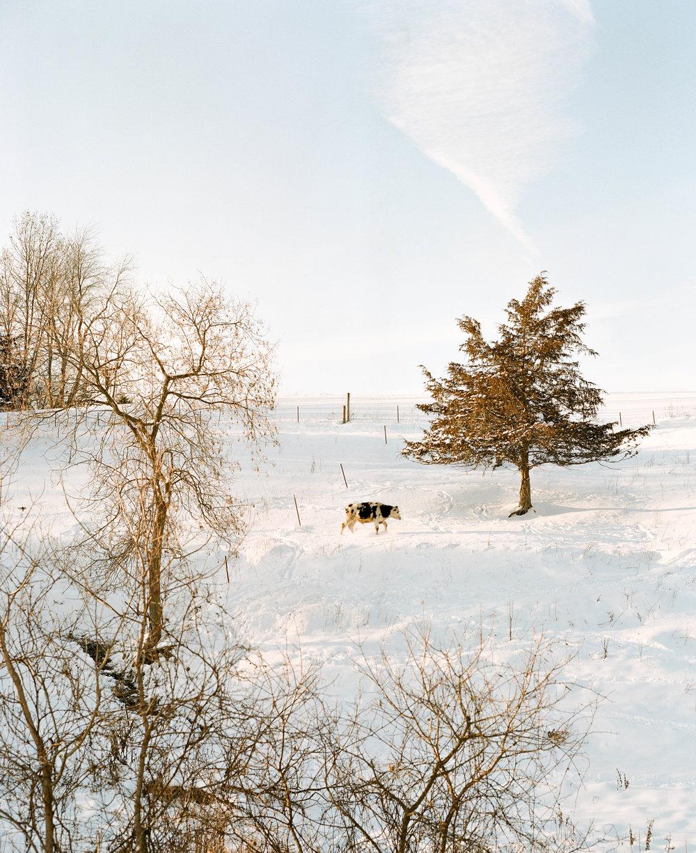 Winter Wonderland, 2016