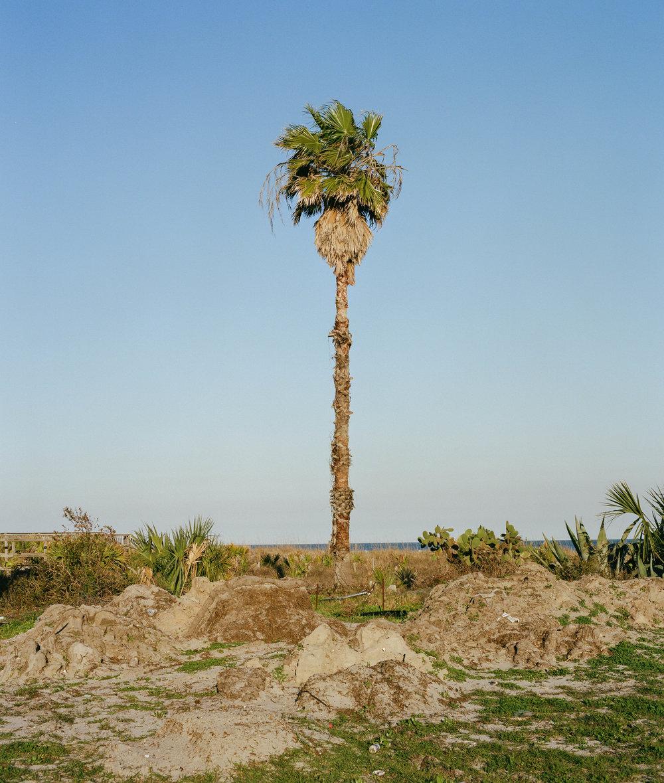 Sea Palm (Folly Beach), 2017