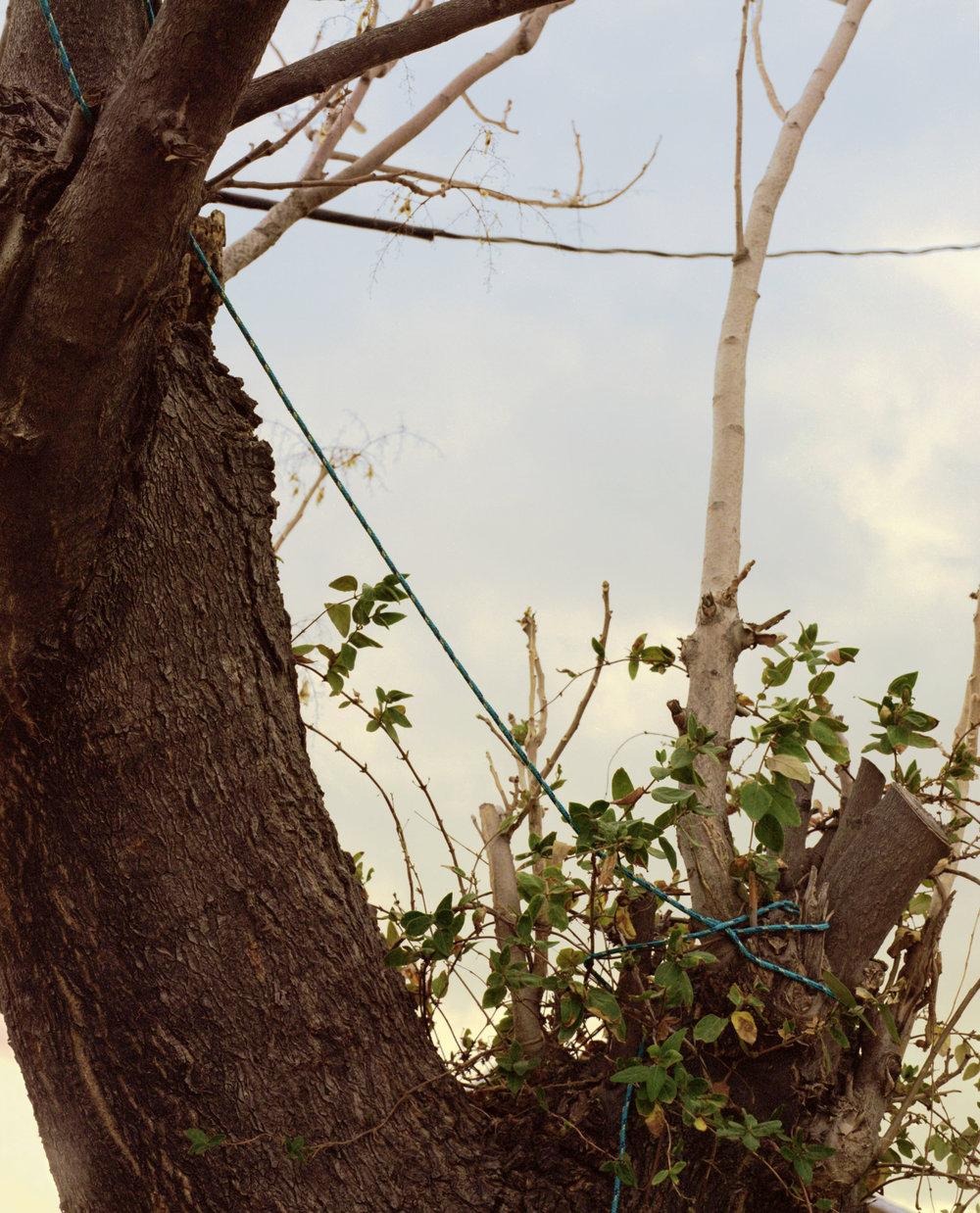 Bound Tree.jpg