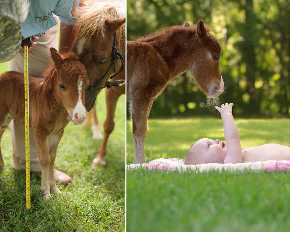 horse_forweb.jpg