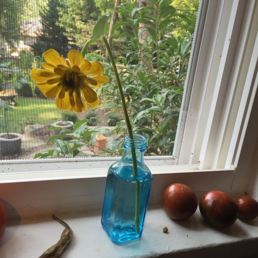 specialflower