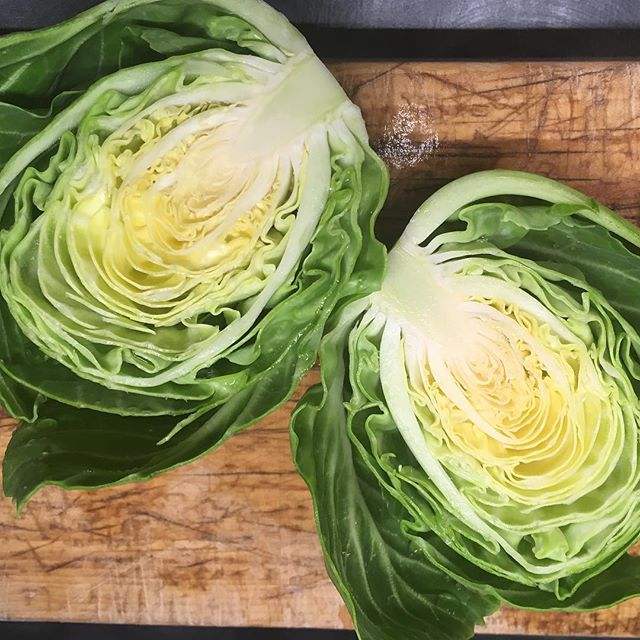 @bakercreekseeds says that Brunswick cabbage is cold hardy, and it definitely is to have made it through this winter.