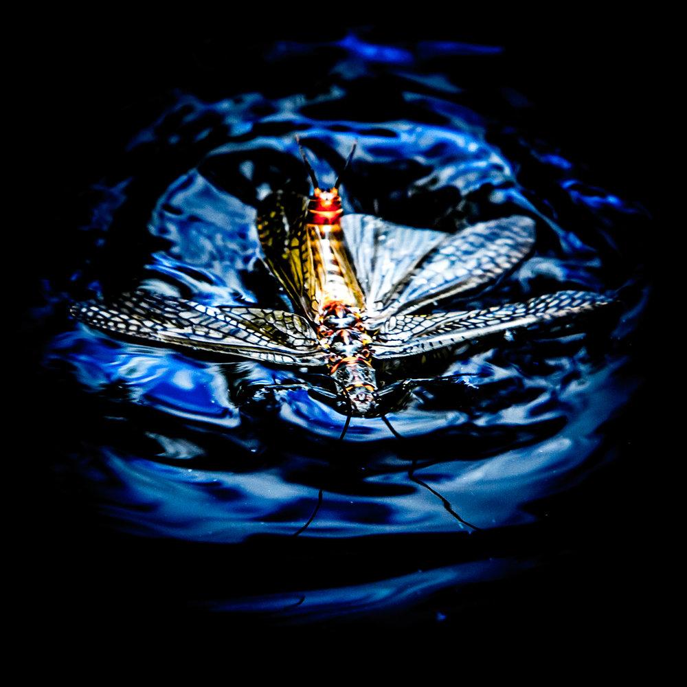 salmonwater-2.jpg