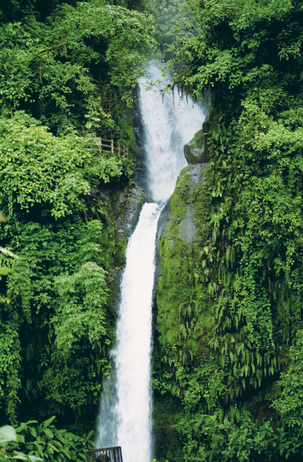 waterfall-gardens-102.jpg