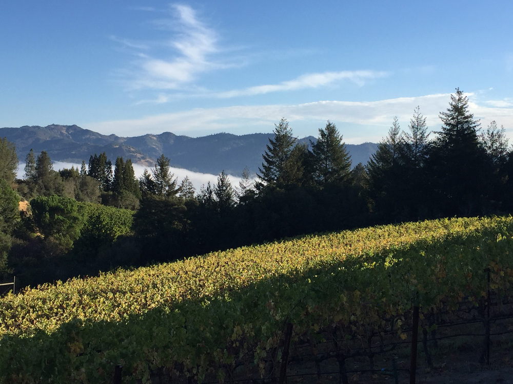 The view east as fog rolls down Napa Valley