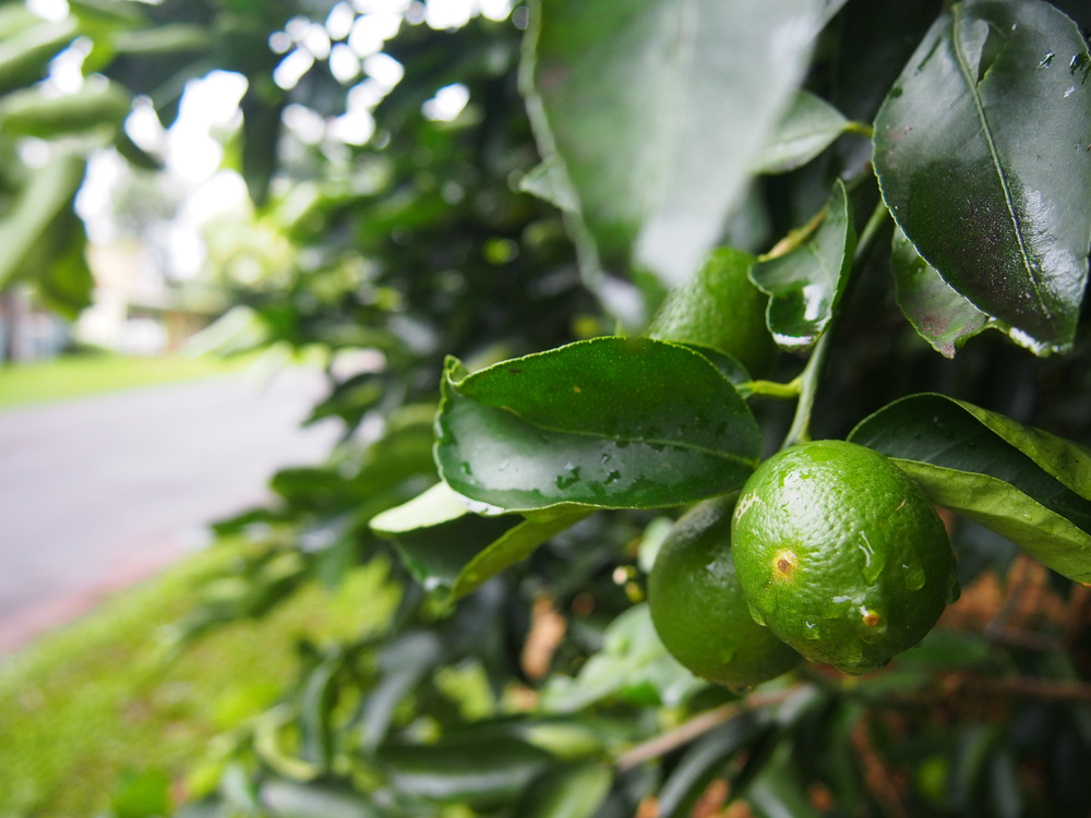Clithero St. verge grown limes.