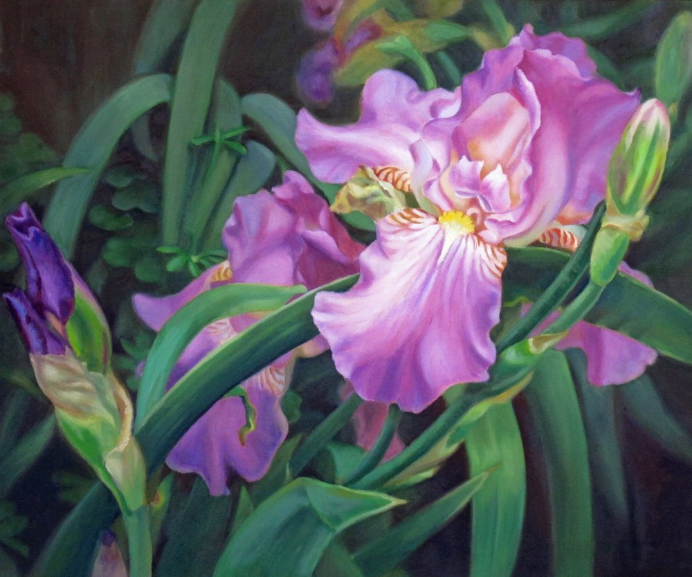 Irises   (sold)