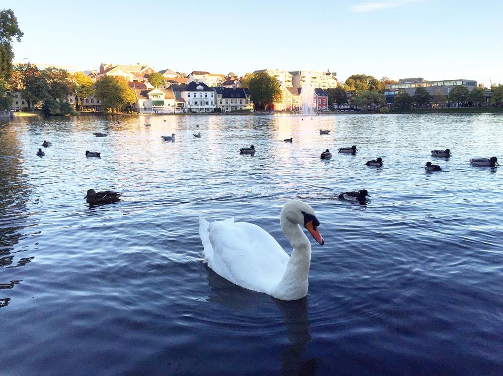 Stavanger - Swan.jpg