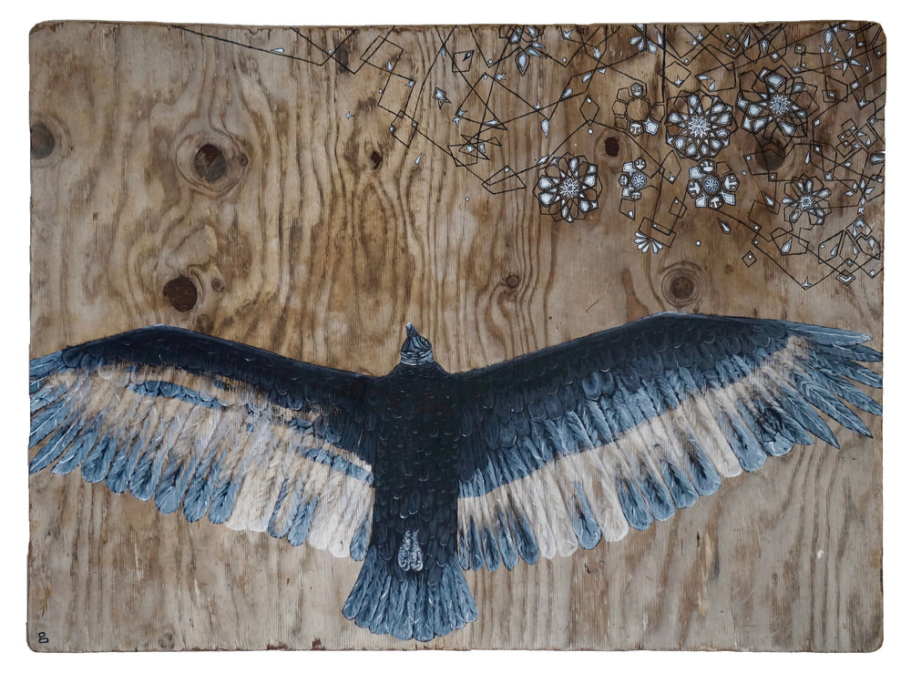 "GHOST BUZZARD  2017  ACRYLIC ON FOUND WOOD  35"" x 48"" x 1/2"""