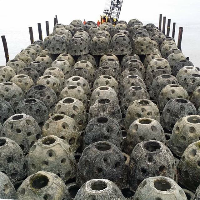Coral balls are ready to be sunk. Hooray!! #oceanconservation #reefballs #nomoreghostnets #newdivesites