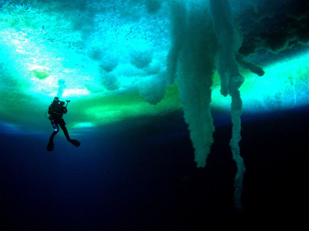 A diver swims past cathedral spires in the inverted, alien world beneath the ice of the Antarctic in  Encounters at the End of the World  (2007).
