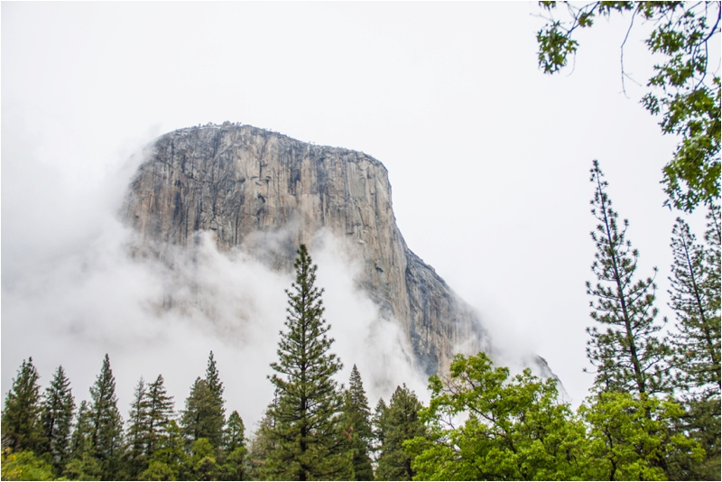 El Capitan peaking out beyond the dense fog