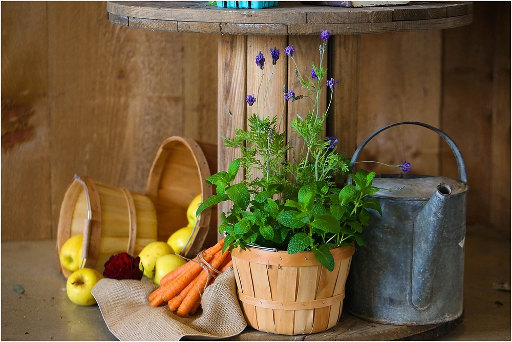Central_VA_Barn_at_Edgewood_Farm_Farm_to_Table_Styled_Shoot_0011.jpg