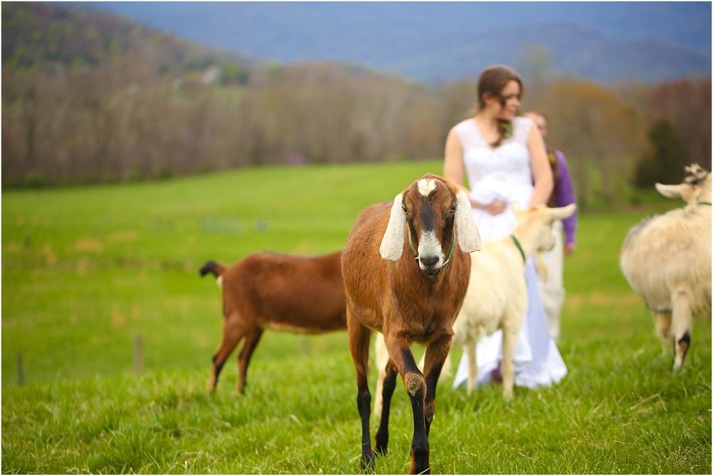 Central_VA_Barn_at_Edgewood_Farm_Farm_to_Table_Styled_Shoot_0080.jpg