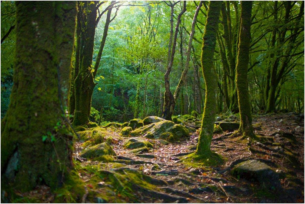 Ireland-Road-Trip-2016-8963.jpg