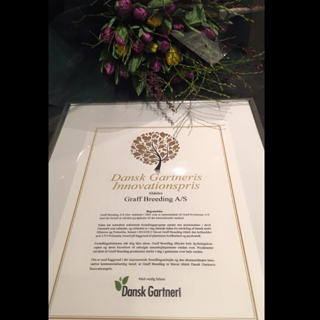 "Graff Breeding A/S was awarded by the Danish grower association ""Dansk Gartneri"" with their innovation Award for the outstanding innovation in the Hibiscus and Poinsettia Breeding program. Thank you!  #hibisqs#breeding#award#graff#hibiscus#poinsettia#innovation"