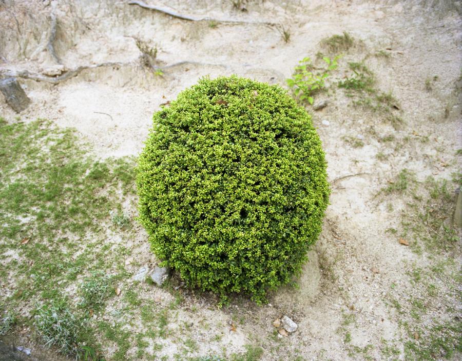 Onomichi8.jpg