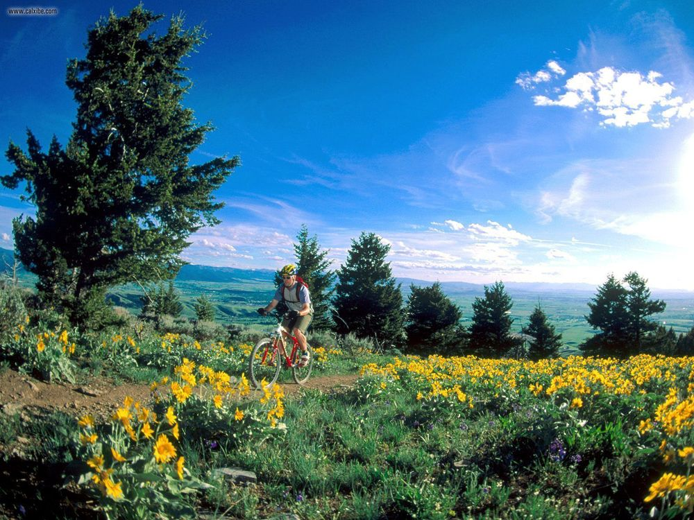 Climbing_through_Flowers_Bozeman_Montana.jpg