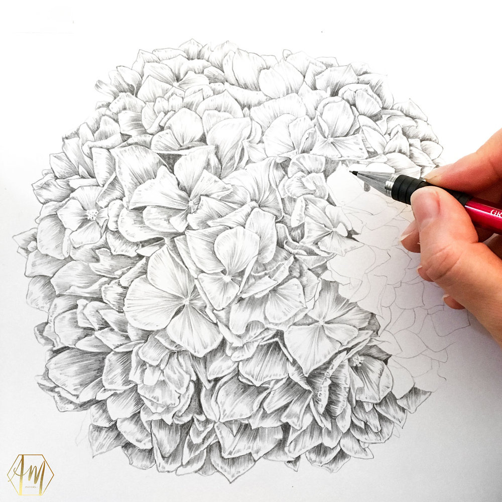 April Mawhinney Design Studio | Hydrangea pencil drawing | Illustration | Surface Pattern Design
