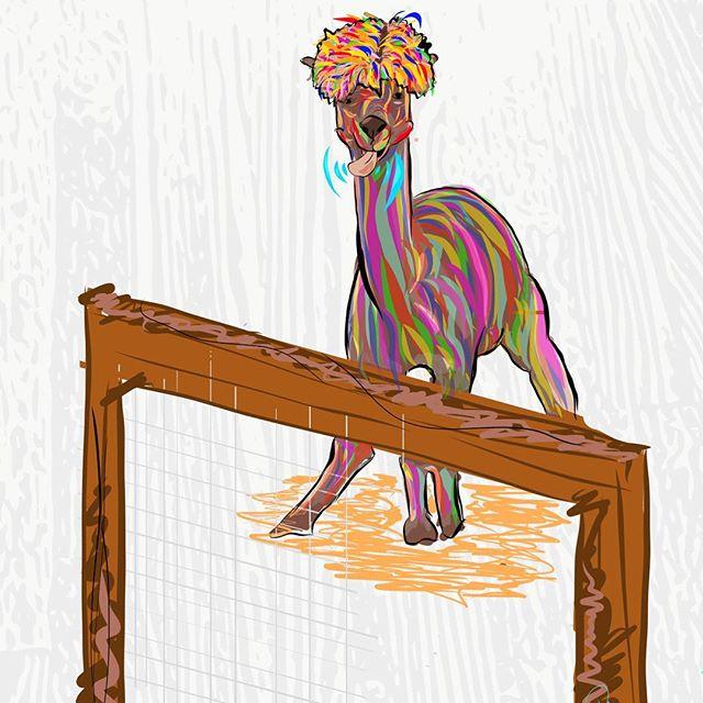 Llama tell you about me... #graphicdesign  #illustration #adobe #adobemobile #adobedraw #llama #notllama #llamasdontseecolor #ipadpro