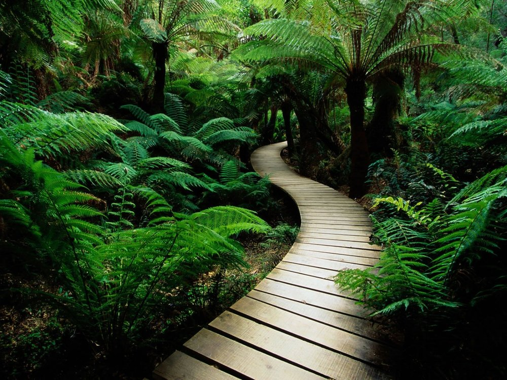 stockvault-path-in-nature124348.jpg
